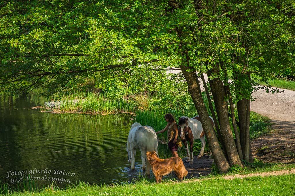 Zwei PFerde im Schatten eines Baumes am Seeufer