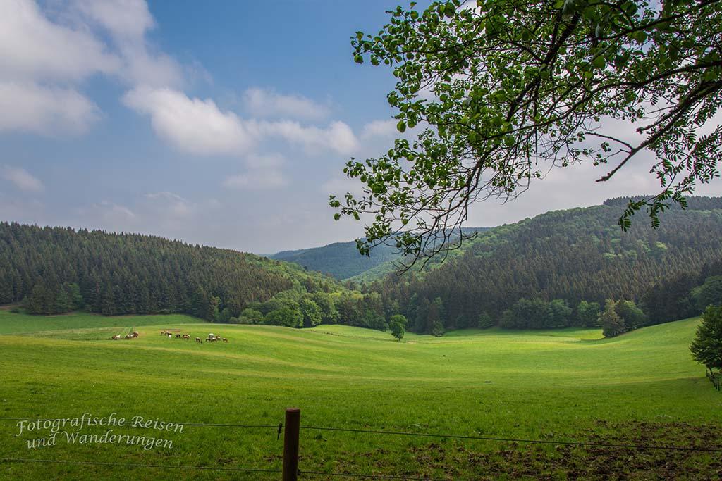 Weit schauen in der Eifel - Spessart in der Eifel