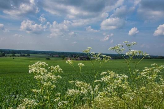 Tecklenburger Bergpfad (50)