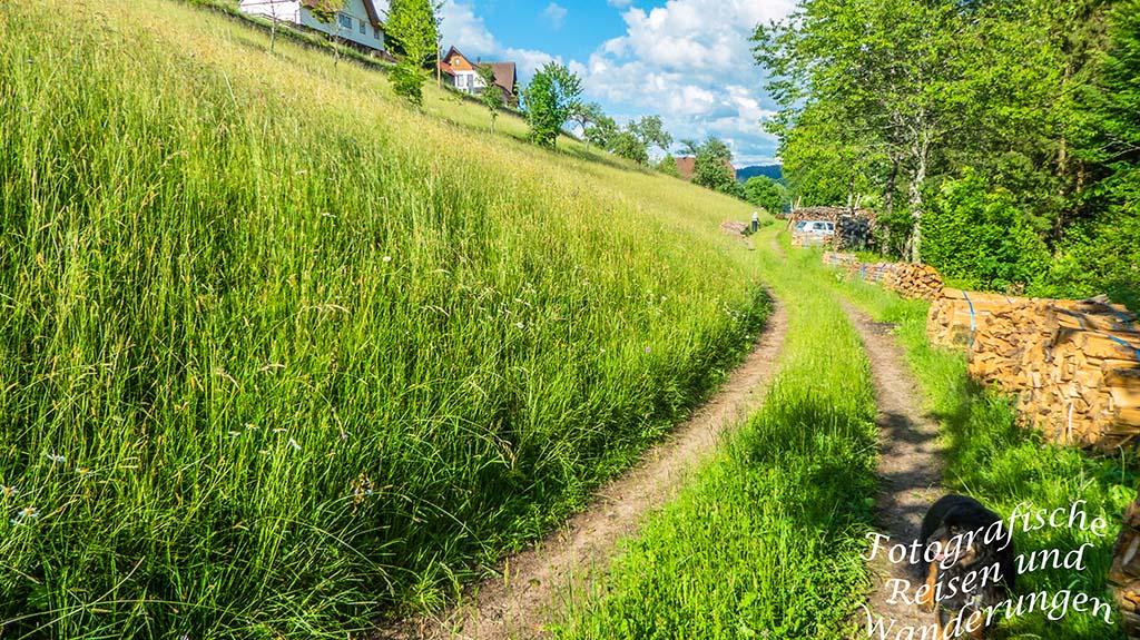 Weg zur Ferienwohnung-Urlaub im Nord-Schwarzwald