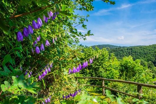 Sommerblumen ragen überall in die Wege