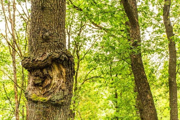 Was verursacht solche Schäden an den Bäumen
