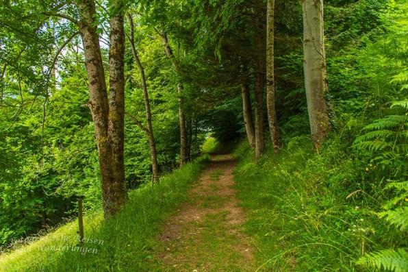 Der Himmelssteig in Bad Peterstal-Griesbach (163)