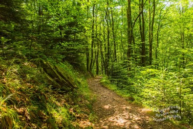 Der Schwarzwaldsteig (130)
