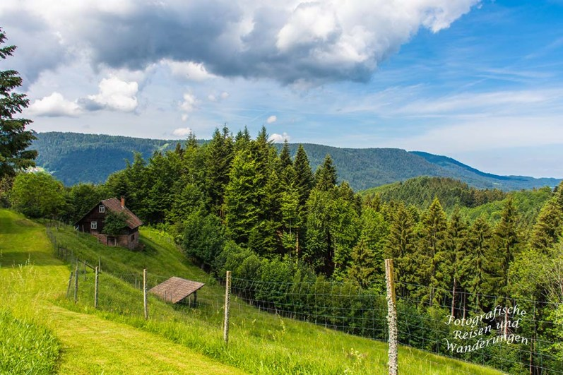 Der Schwarzwaldsteig (87)