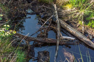 Viel Wasser steht auch hier nicht mehr