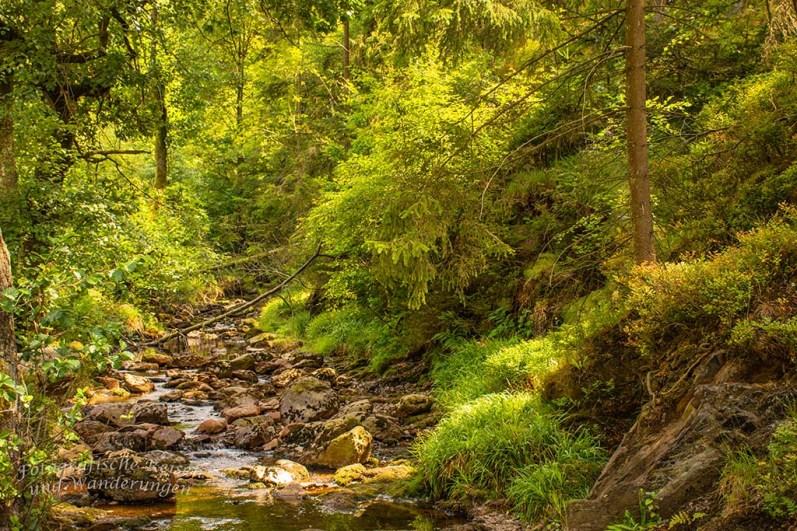 Hohes Venn_Wasserfall von Bayonne und Burg Reinhardstein (227)