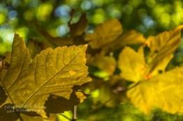 Die Blätter vieler Bäume nehmen schon Herbstfarben an