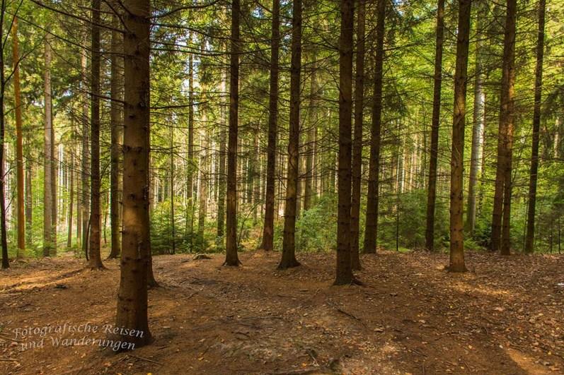 Herrlich lichter Wald, zum verlieben