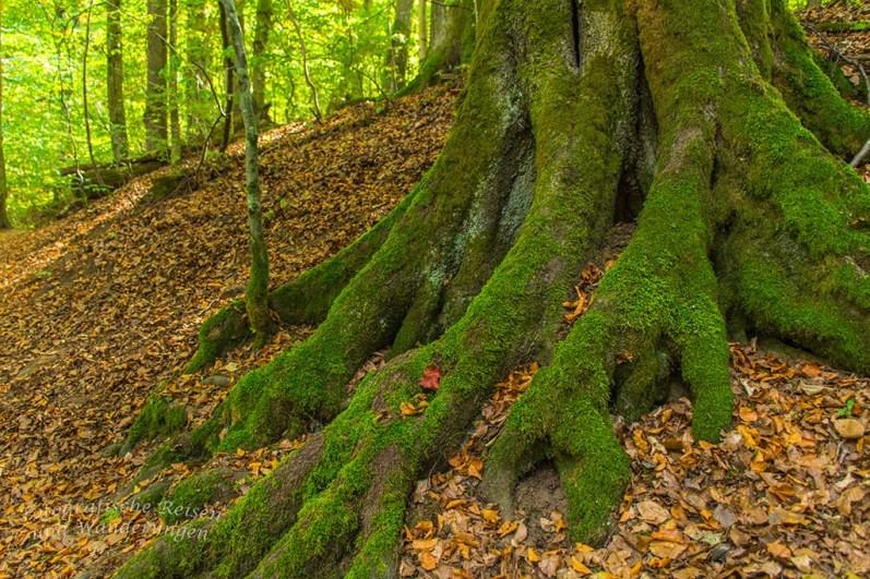 Grüne Füße der dicken Bäume