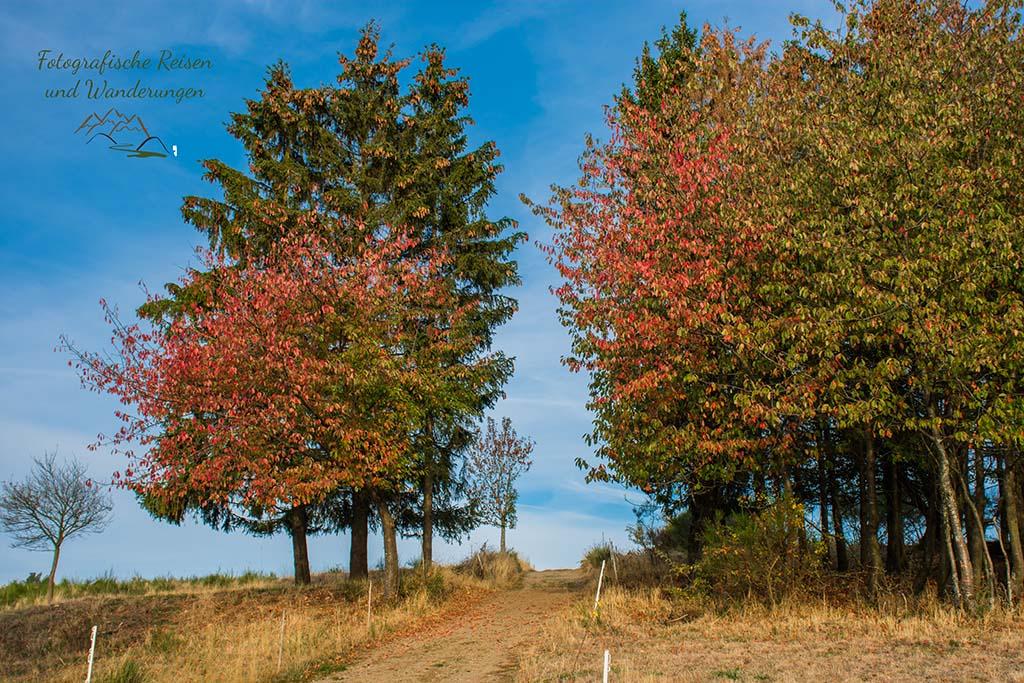Einsame Wanderwege in Arft - Herrlich herbstlicher Wiesenweg