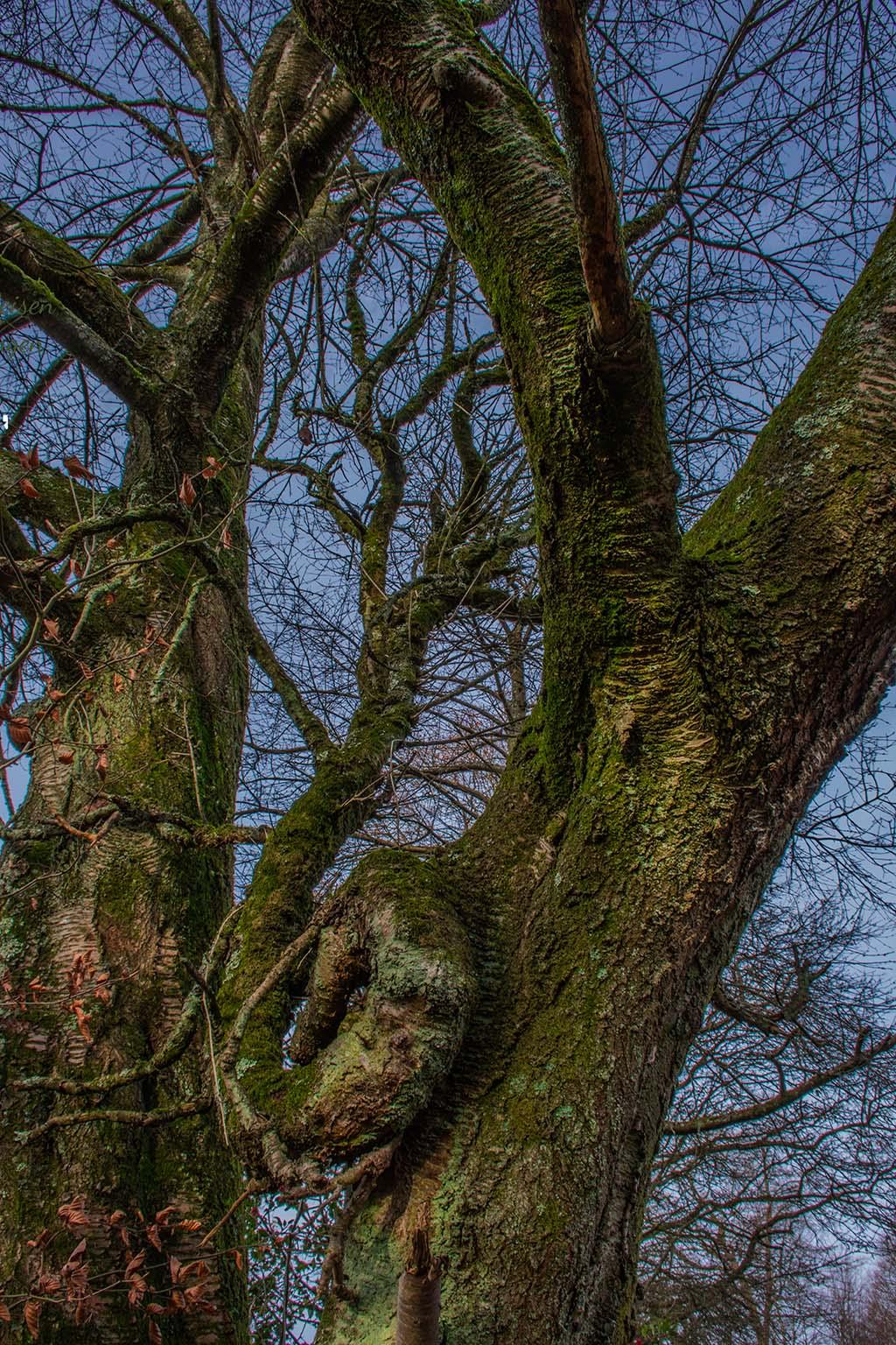 Ein Baum mit Schnörkel