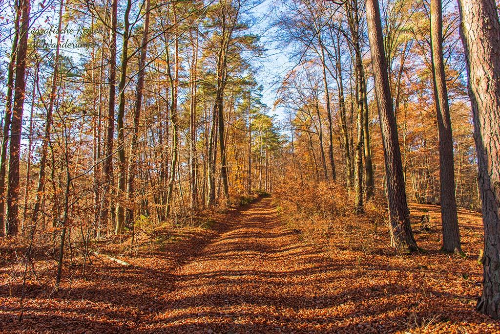 Sonnen gefluteter Waldweg im Herbst
