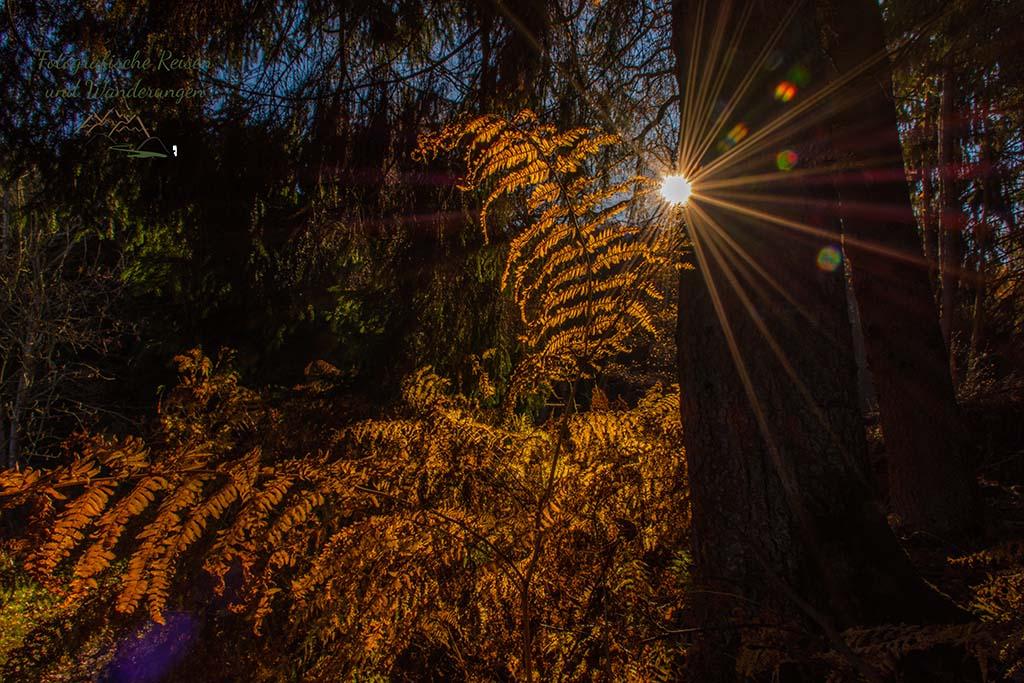 Sonnenlicht über herbstlichem Farn