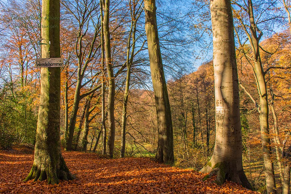 Wendehammer mitten im Wald