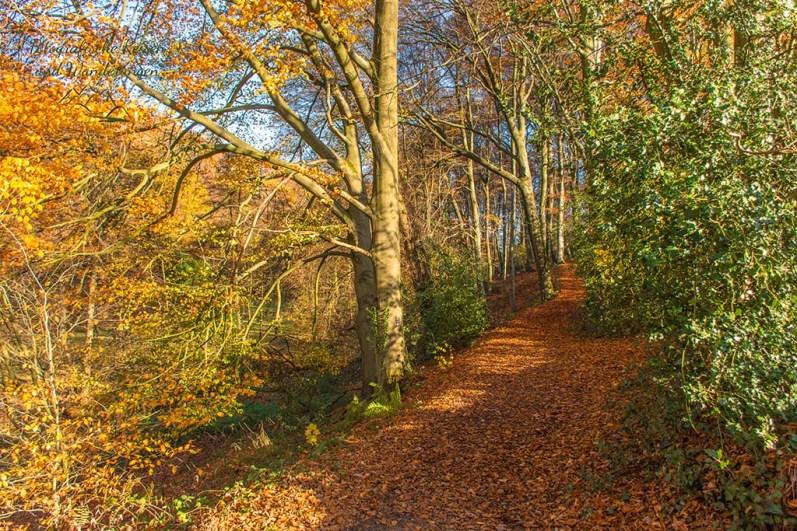 Herrliche Herbstlaubwege