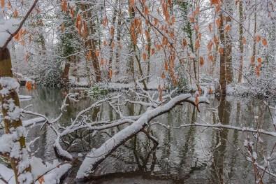 Totholz darf liegen bleiben - Rundgang durch Schlosspark Morsbroich