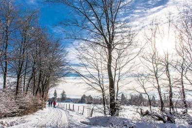 Schneewanderung in Muetzenich (91)