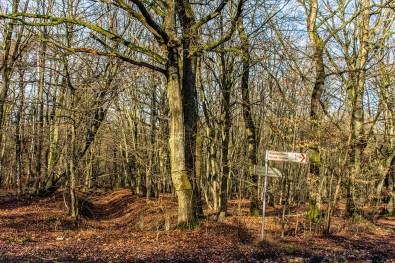 Wahner Heide-Durch die Maikammer (55)