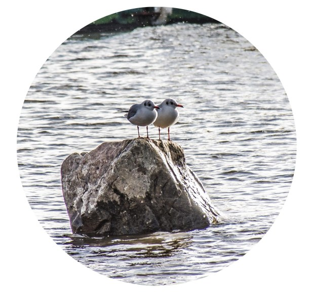 Zwei Möwen auf einem Stein