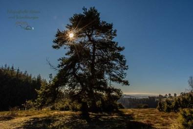 Die Sonne schaut durch die Baumwipfel - Der Bergheidenweg