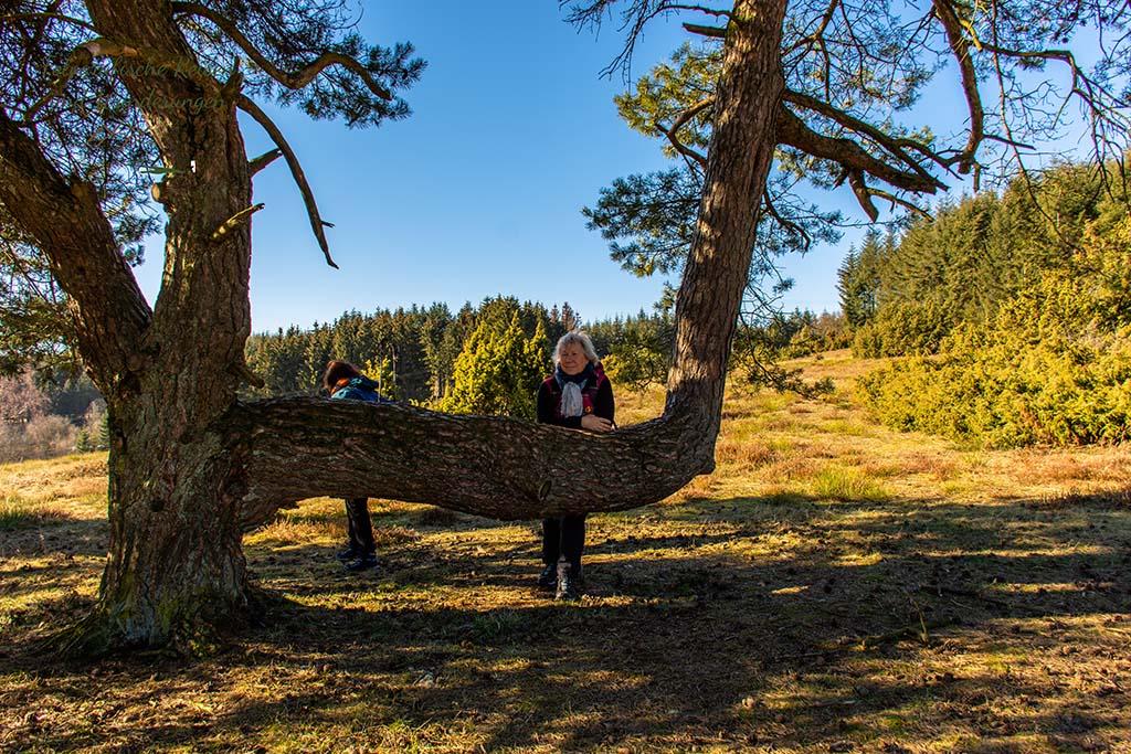 Elke am Sitzbaum