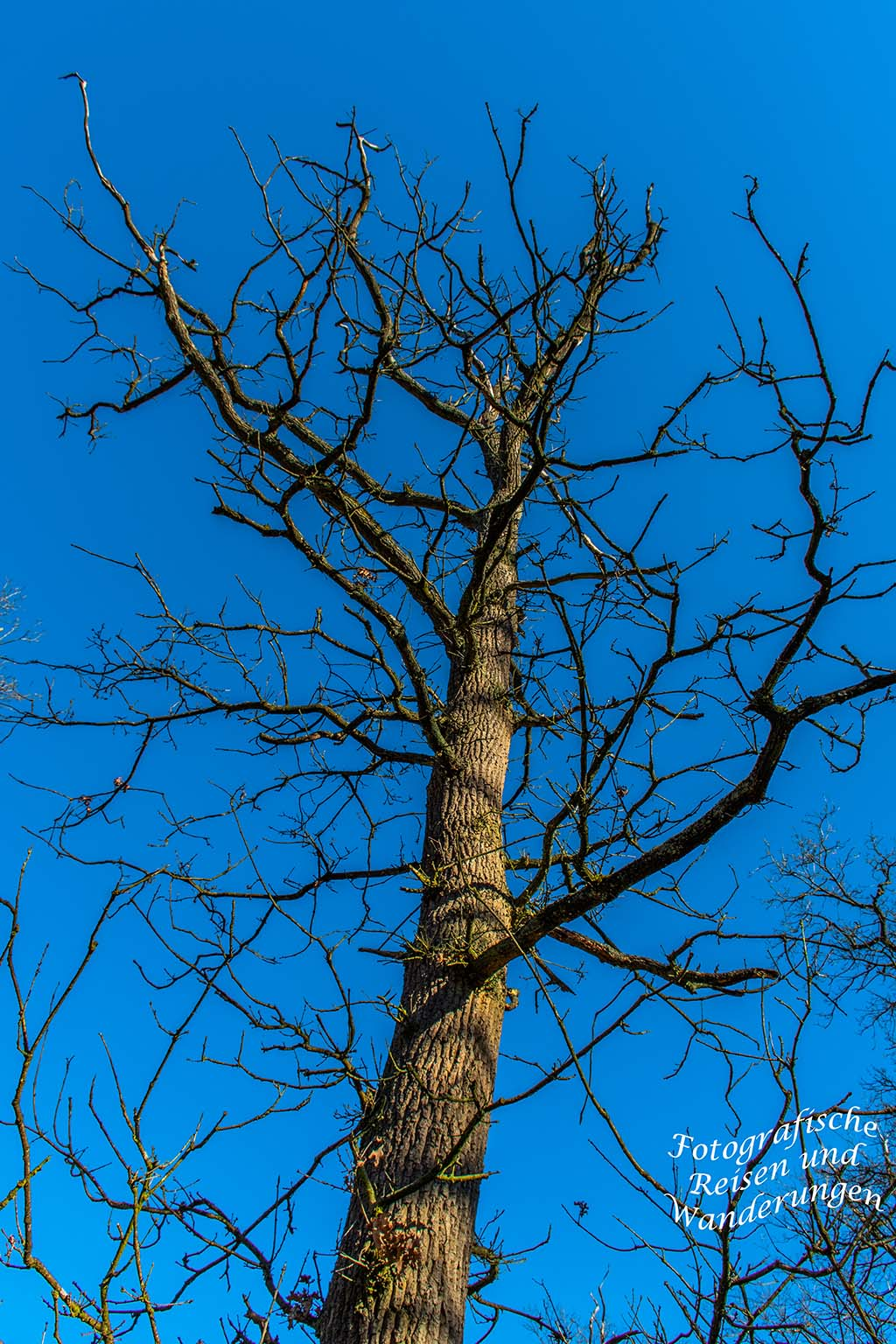 Kahle Zweige ragen in den blauen Himmel - Wandertipp am Niederhein - Diersfordter Wald