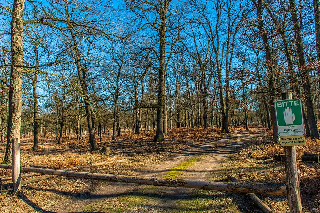 Gesperrter Weg im Diersfordter Wald
