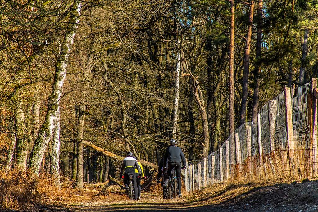 Wandertipp am Niederhein - Radfahrergruppe im Diersfordter Wald