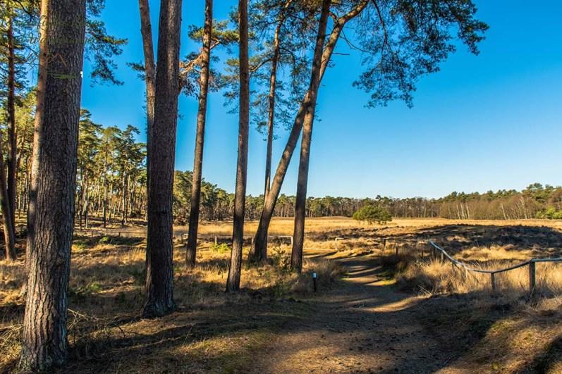 Sandige Wege im Diersfordter Wald