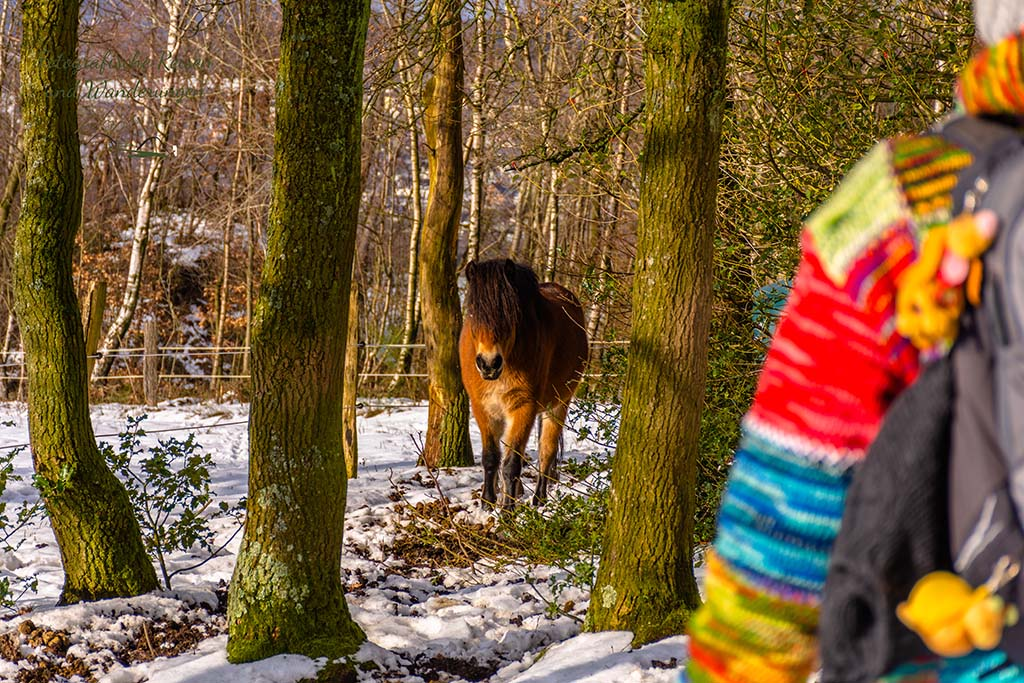 Tanja und die Ponys