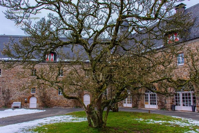 Wunderschöne alte Bäume im Schlosspark Ehreshoven- Wandern in der Bergische Schweiz