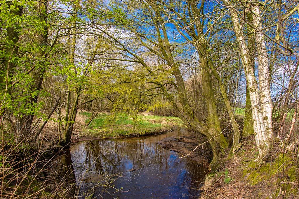So viel Grün an den Büschen - Wandern für die Seele - Münsterland