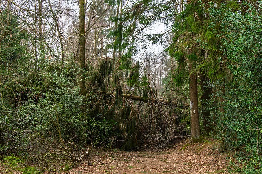 Quer liegende Baum auf dem A3 Wanderweg