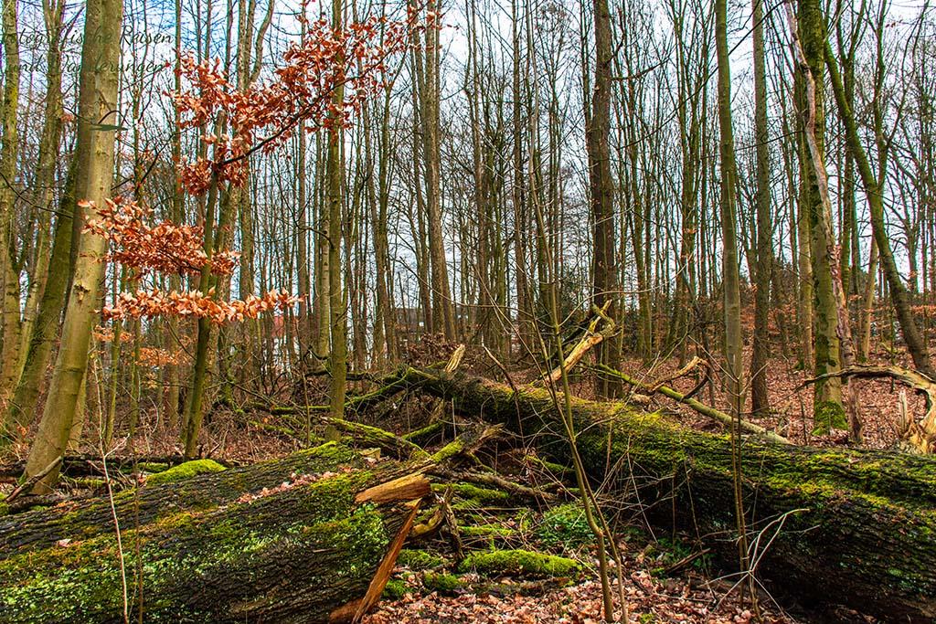 Weitmarer Holz - Totholz in rauen MEngen