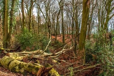 Bochum Weitmarer Holz (75)