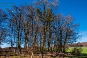 Ein winziges Stück Wald - Eifelschleife Fuchshöhle