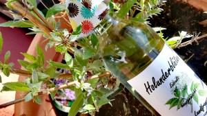 Holunderblüten Extrakt