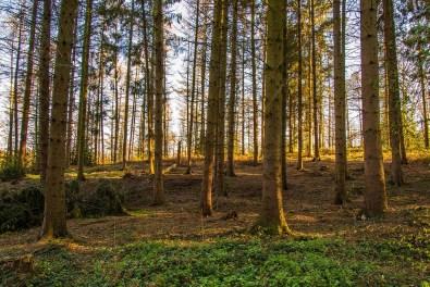 Haufenweise Pingen in diesem Waldstück