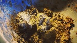 Teig - Seedbombs (Samenbomben) selber herstellen