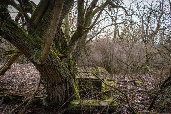 Ruinenreste unter einem Baum