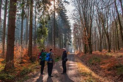 Breite Waldwege