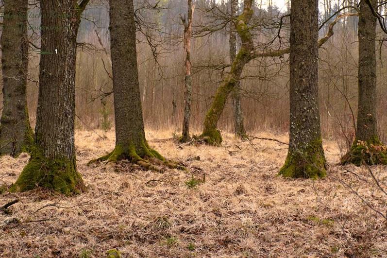 Typische Vennlandschaft in den Wintermonaten - Eifelsteig Etappe 2