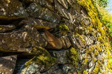 Detailaufnahme Trockenmauer
