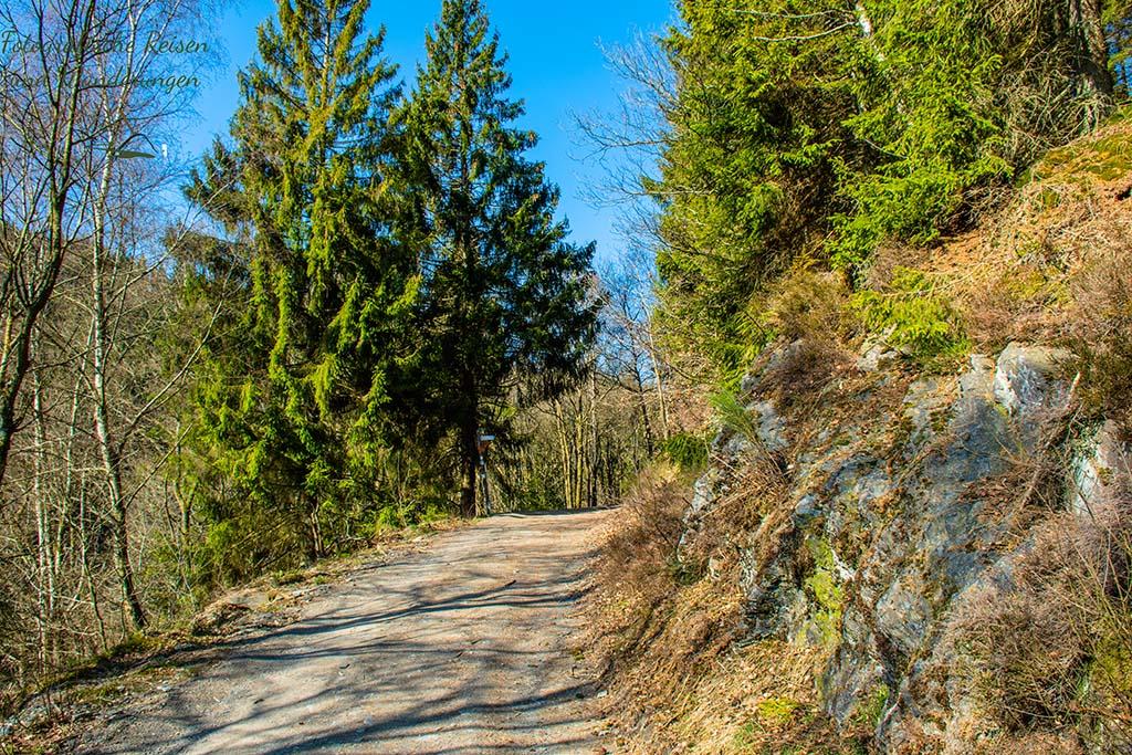 Wanderweg mit Felswand - Wilde Narzissen in der Eifel