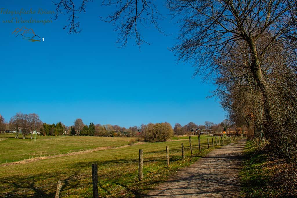 Endspurt - Wilde Narzissen in der Eifel