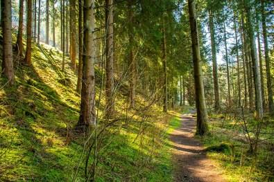 Auf schmalem Pfad entlang des Fuhrtsbach