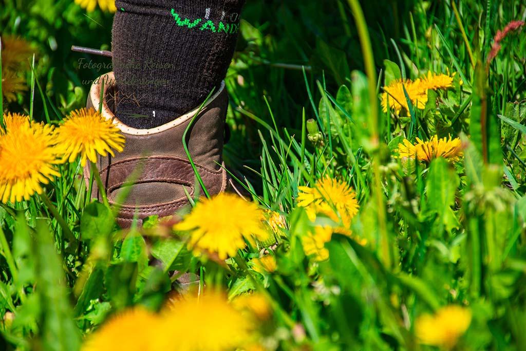 """Tanja mit ihren Socken """"I love wandern"""" inmitten eines gelb blühenden Löwenzahnwiese"""