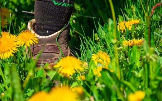 """Tanja mit ihren Socken """"I love wandern"""" inmitten eines gelb blühenden Löwenzahnwiese - Zwei Bäche Pfad"""