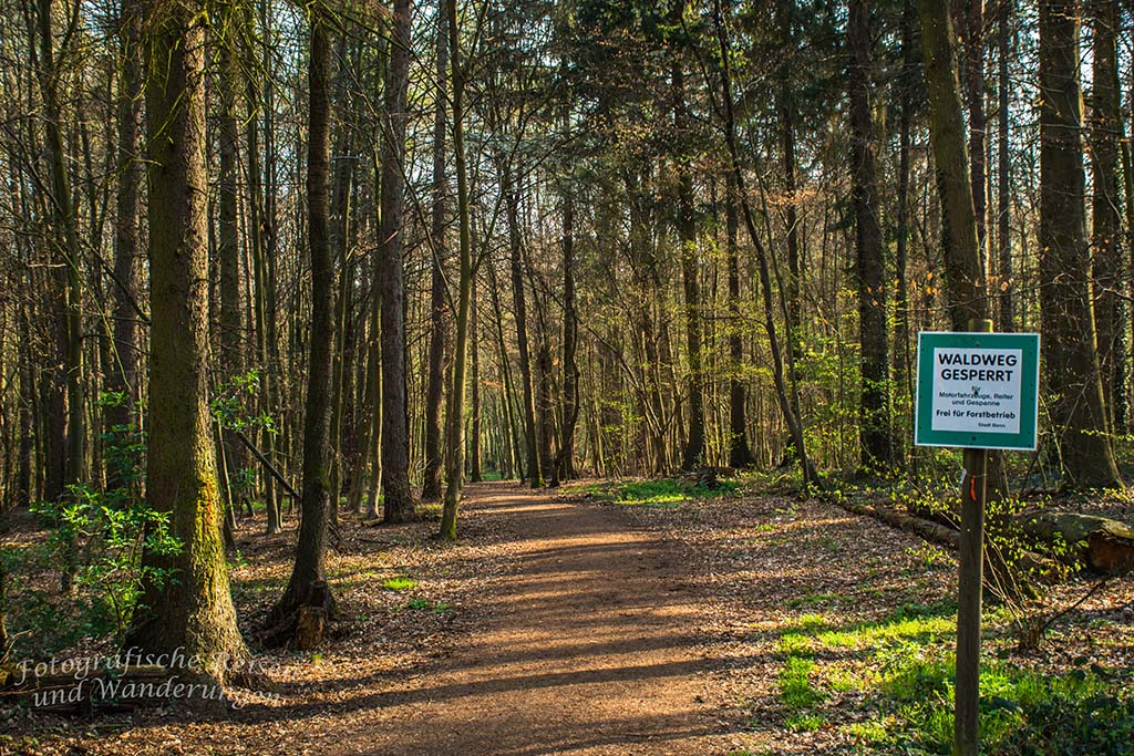 Schicker Waldweg